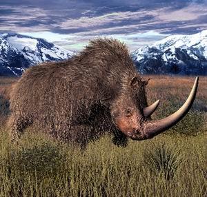 rinoceronte lanudo