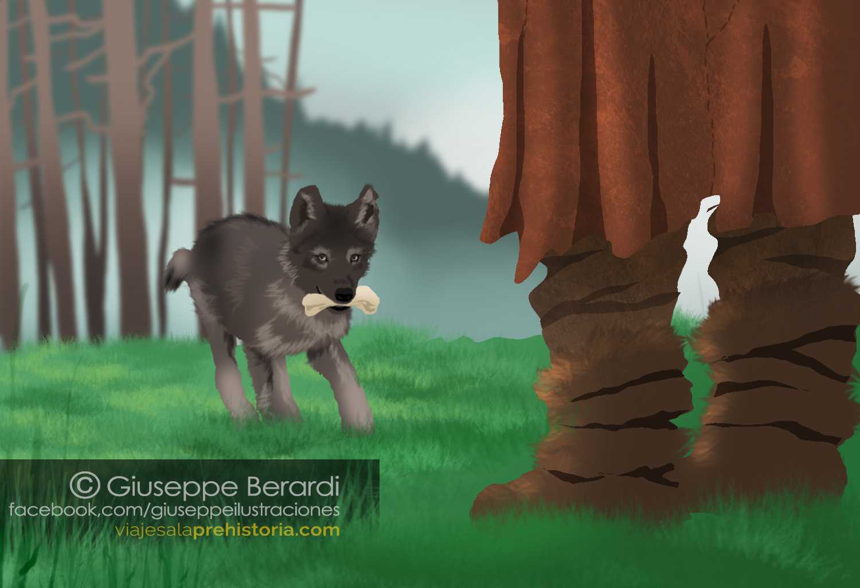 Cachorro de Lobo devuelve una pelota